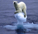 Picture of a polar bear sitting on a meting piece of ice.